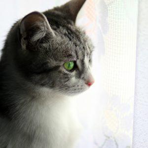 cat-3962414_1920